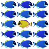ζωηρόχρωμα ψάρια Στοκ Εικόνες