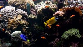 Ζωηρόχρωμα ψάρια απόθεμα βίντεο