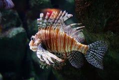 ζωηρόχρωμα ψάρια Στοκ φωτογραφία με δικαίωμα ελεύθερης χρήσης