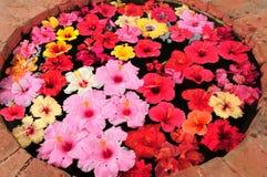 ζωηρόχρωμα hibiscus στοκ φωτογραφίες με δικαίωμα ελεύθερης χρήσης