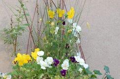 Ζωηρόχρωμα pansies που μεγαλώνουν έναν γκρίζο τοίχο στοκ εικόνα με δικαίωμα ελεύθερης χρήσης