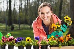 Ζωηρόχρωμα pansy λουλούδια στα δοχεία Στοκ Εικόνες