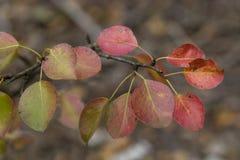 Ζωηρόχρωμα shad φύλλα χτυπήματος στα χρώματα πτώσης Στοκ εικόνες με δικαίωμα ελεύθερης χρήσης