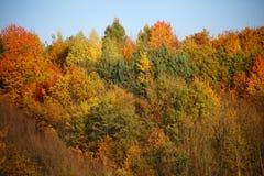 Ζωηρόχρωμα treetops των μικτών ειδών στοκ εικόνες