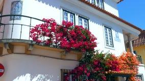 Ζωηρόχρωμες άμπελοι Bugambilia που καλύπτουν μια πρόσοψη ενός σπιτιού στο Κασκάις, Πορτογαλία απόθεμα βίντεο