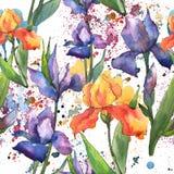 Ζωηρόχρωμες ίριδες Floral βοτανικό λουλούδι Άνευ ραφής πρότυπο ανασκόπησης απεικόνιση αποθεμάτων