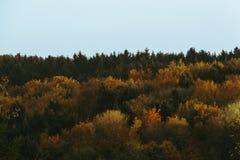 Ζωηρόχρωμες κορυφές δέντρων που χτυπιούνται από το χρυσό φως του ήλιου κατά τη διάρκεια του ηλιοβασιλέματος στο autum στοκ εικόνα
