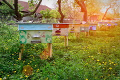 Ζωηρόχρωμες κυψέλες που τοποθετούνται στον κήπο aphrodisiac Μελισσοκομία Στοκ φωτογραφίες με δικαίωμα ελεύθερης χρήσης