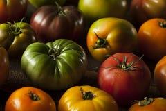 Ζωηρόχρωμες οργανικές ντομάτες οικογενειακών κειμηλίων Στοκ Φωτογραφία