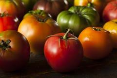 Ζωηρόχρωμες οργανικές ντομάτες οικογενειακών κειμηλίων Στοκ εικόνες με δικαίωμα ελεύθερης χρήσης