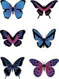 Ζωηρόχρωμες πεταλούδες Στοκ εικόνες με δικαίωμα ελεύθερης χρήσης