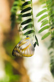 Ζωηρόχρωμες πεταλούδες σε μια φύση Στοκ φωτογραφία με δικαίωμα ελεύθερης χρήσης