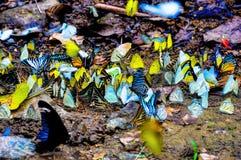 Ζωηρόχρωμες πεταλούδες στο δάσος ελεύθερη απεικόνιση δικαιώματος