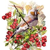ζωηρόχρωμες πουλί, λουλούδι και σορβιά Στοκ εικόνα με δικαίωμα ελεύθερης χρήσης