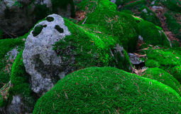 Ζωηρόχρωμες πράσινες mossy μεγάλες πέτρες Φωτογραφία που απεικονίζει φωτεινό έναν θαμνώδη Στοκ Φωτογραφία