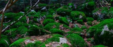 Ζωηρόχρωμες πράσινες mossy μεγάλες πέτρες Φωτογραφία που απεικονίζει φωτεινό έναν θαμνώδη Στοκ φωτογραφία με δικαίωμα ελεύθερης χρήσης