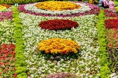 Ζωηρόχρωμες σειρές των λουλουδιών άνοιξη Στοκ Εικόνες