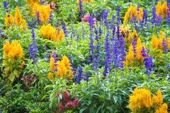 Ζωηρόχρωμες σειρές των λουλουδιών στον πράσινο κήπο Στοκ φωτογραφίες με δικαίωμα ελεύθερης χρήσης
