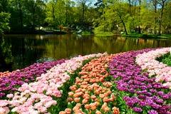 Ζωηρόχρωμες τουλίπες στο πάρκο Keukenhof, Κάτω Χώρες στοκ εικόνες με δικαίωμα ελεύθερης χρήσης