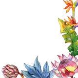 Ζωηρόχρωμες τροπικές εγκαταστάσεις Floral βοτανικό λουλούδι Τετράγωνο διακοσμήσεων συνόρων πλαισίων Στοκ εικόνα με δικαίωμα ελεύθερης χρήσης