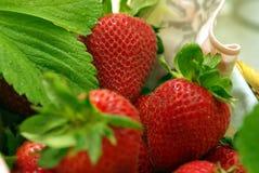 ζωηρόχρωμες φράουλες κ&alph Στοκ φωτογραφία με δικαίωμα ελεύθερης χρήσης