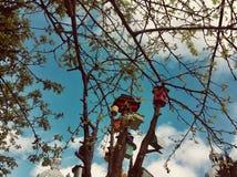 ζωηρόχρωμες φωλιές πουλιών στοκ εικόνες