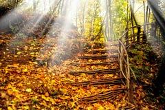 Ζωηρόχρωμες φύλλα και σκάλα Στοκ Φωτογραφίες