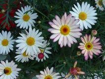 ζωηρόχρωμη άνοιξη λουλο&upsil Στοκ φωτογραφίες με δικαίωμα ελεύθερης χρήσης