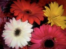 Ζωηρόχρωμη δέσμη λουλουδιών μαργαριτών Στοκ φωτογραφία με δικαίωμα ελεύθερης χρήσης
