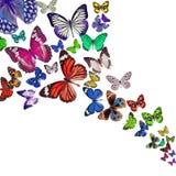 Ζωηρόχρωμη ανασκόπηση με την πεταλούδα Στοκ Φωτογραφία