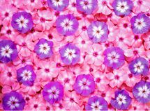 Ζωηρόχρωμη ανθοδέσμη λουλουδιών, υπόβαθρο λουλουδιών Στοκ Εικόνα