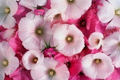 Ζωηρόχρωμη ανθοδέσμη λουλουδιών, υπόβαθρο λουλουδιών Στοκ φωτογραφία με δικαίωμα ελεύθερης χρήσης