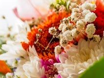 Ζωηρόχρωμη ανθοδέσμη του θερινού λουλουδιού Στοκ Φωτογραφίες