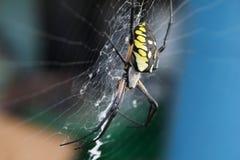 Ζωηρόχρωμη αράχνη Στοκ Εικόνες