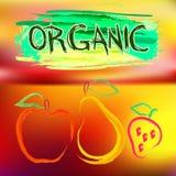 Ζωηρόχρωμη αφίσα με τα χρωματισμένα οργανικά φρούτα διανυσματική απεικόνιση