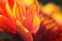 Ζωηρόχρωμη αφηρημένη floral μακροεντολή υποβάθρου Στοκ εικόνα με δικαίωμα ελεύθερης χρήσης