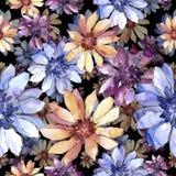 Ζωηρόχρωμη αφρικανική μαργαρίτα Floral βοτανικό λουλούδι Άνευ ραφής πρότυπο ανασκόπησης Στοκ Φωτογραφία