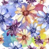 Ζωηρόχρωμη αφρικανική μαργαρίτα Floral βοτανικό λουλούδι Άνευ ραφής πρότυπο ανασκόπησης Στοκ Φωτογραφίες