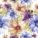 Ζωηρόχρωμη αφρικανική μαργαρίτα Floral βοτανικό λουλούδι Άνευ ραφής πρότυπο ανασκόπησης Στοκ φωτογραφίες με δικαίωμα ελεύθερης χρήσης