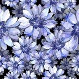 Ζωηρόχρωμη αφρικανική μαργαρίτα Floral βοτανικό λουλούδι Άνευ ραφής πρότυπο ανασκόπησης Στοκ εικόνες με δικαίωμα ελεύθερης χρήσης