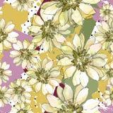 Ζωηρόχρωμη αφρικανική μαργαρίτα Floral βοτανικό λουλούδι Άνευ ραφής πρότυπο ανασκόπησης Στοκ Εικόνες