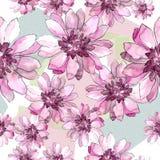 Ζωηρόχρωμη αφρικανική μαργαρίτα Floral βοτανικό λουλούδι Άνευ ραφής πρότυπο ανασκόπησης Στοκ εικόνα με δικαίωμα ελεύθερης χρήσης