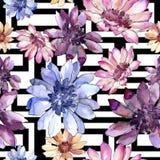 Ζωηρόχρωμη αφρικανική μαργαρίτα Floral βοτανικό λουλούδι Άνευ ραφής πρότυπο ανασκόπησης Στοκ Εικόνα