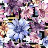 Ζωηρόχρωμη αφρικανική μαργαρίτα Floral βοτανικό λουλούδι Άνευ ραφής πρότυπο ανασκόπησης Στοκ φωτογραφία με δικαίωμα ελεύθερης χρήσης