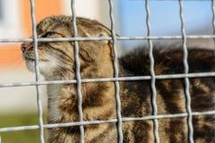 Ζωηρόχρωμη γάτα υπαίθρια Στοκ Εικόνα