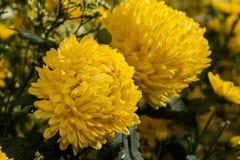ζωηρόχρωμη διακόσμηση λουλουδιών στην αγορά λουλουδιών Στοκ εικόνες με δικαίωμα ελεύθερης χρήσης