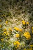 ζωηρόχρωμη διακόσμηση λουλουδιών στην αγορά λουλουδιών Στοκ φωτογραφίες με δικαίωμα ελεύθερης χρήσης