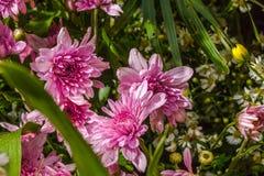 ζωηρόχρωμη διακόσμηση λουλουδιών στην αγορά λουλουδιών Στοκ φωτογραφία με δικαίωμα ελεύθερης χρήσης