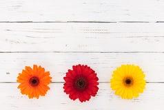 Ζωηρόχρωμη διακόσμηση συνόρων λουλουδιών στο άσπρο ξύλινο επιτραπέζιο υπόβαθρο, τοπ άποψη, διάστημα αντιγράφων Στοκ φωτογραφία με δικαίωμα ελεύθερης χρήσης