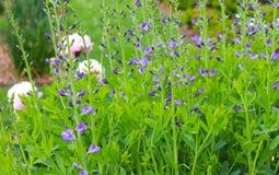 Ζωηρόχρωμη επίδειξη των λουλουδιών στον κήπο στοκ εικόνες